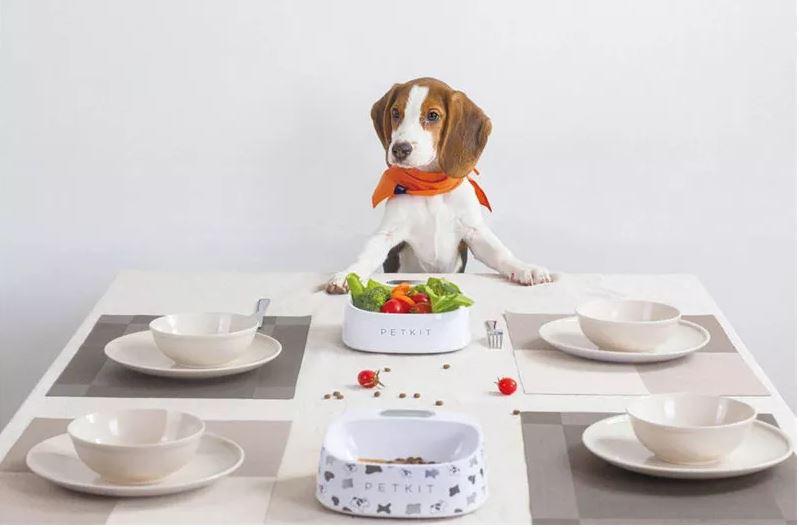 קערת אוכל חכמה לחיות מחמד PETKIT